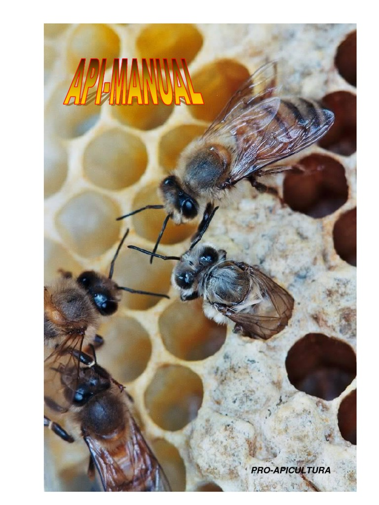 cum se mărește penisul de către albine scleroză multiplă erecție slabă