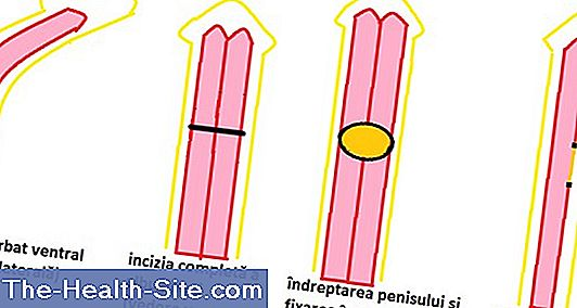 dimensiunea penisului copilului