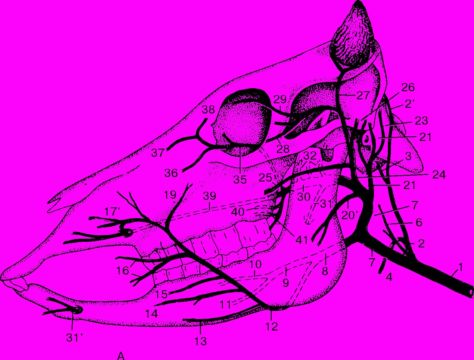 colici pe penis boli ale penisului în timpul actului sexual