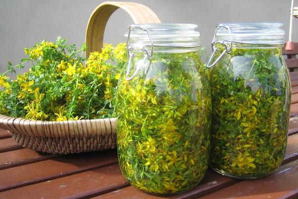 Ceaiuri si plante medicinale pentru impotenta