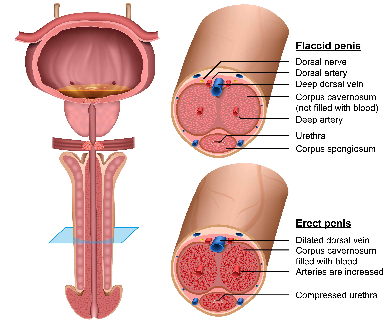 din ce erecție instabilă streptodermia penisului