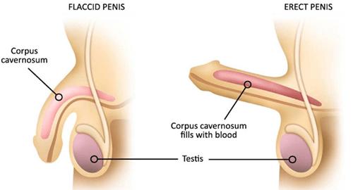 erecție slabă în forumul bărbaților magneți de erecție
