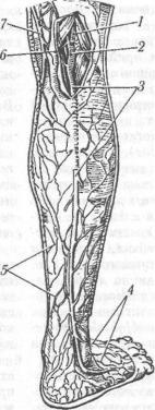colici pe penis de ce persoanele supraponderale au un penis mic