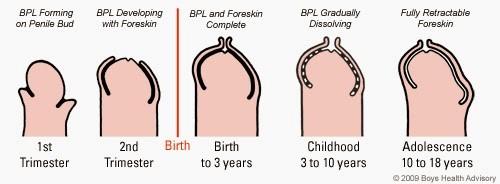 când penisul se lipeste nutriția poate afecta erecția