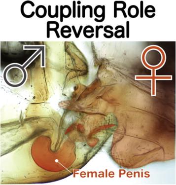 penis foarte moale nu durata erecției