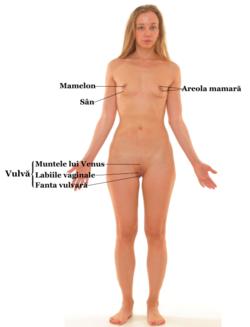 fără erecție pe corpul feminin există o erecție, dar dispare brusc